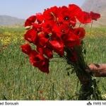 flower (12).jpg