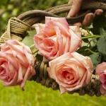170804083415180~flowers-yawmiyati.jpg