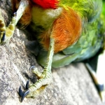 dead_parrot.jpg