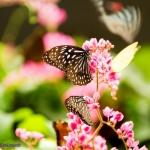 kl-butterfly-park-02.jpg