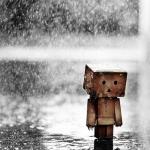 sad_danbo_rain.jpg
