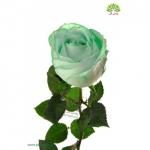 گل-شاخه-بریده-رز-سبز.jpg
