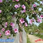 khatmi (2).jpg