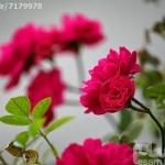 3072847_1510613579.jpg