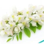 flower-yas-5.jpg