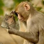 تصویر-میمون-در-آینه.jpg