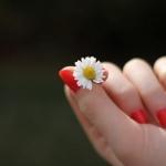 flower-7-700x467.jpg