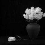 گلدان-رز-سفید.jpg