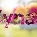 synaa_spring1.jpg