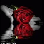1545798965135732_large.jpg