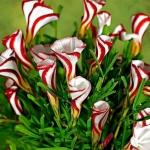 most-amazing-world-flowers-5.jpg
