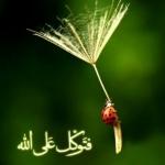 فتوکل علی الله.jpg