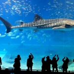 1313-sealife-thailand-ocean-world-bangkok.jpg